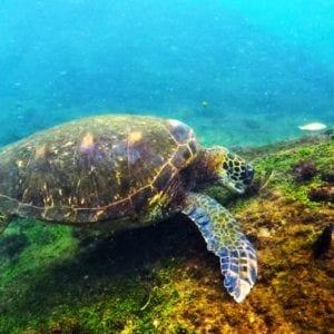 Galapágy a Ekvádor – ráj zvířat