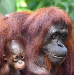 Borneo krásné i drsné